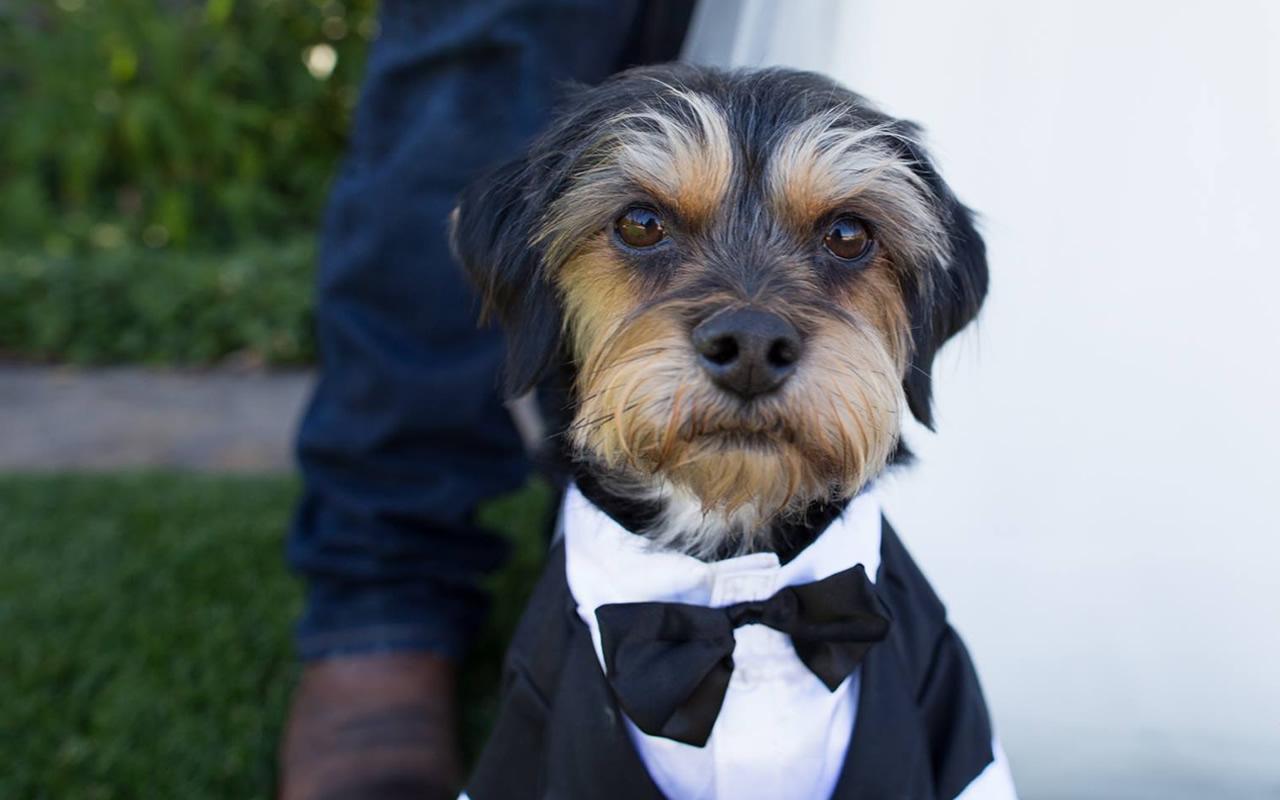 Pet – Puyallup & Chelan Event Planning & Wedding Flowers – 4