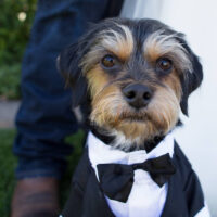 Pet – Puyallup & Chelan Event Planning & Wedding Flowers – 4