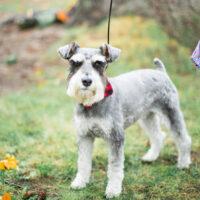 Pet – Puyallup & Chelan Event Planner & Wedding Flowers
